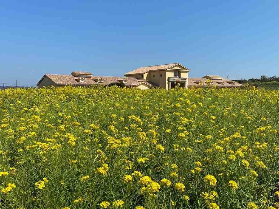 4.長井海の手公園 ソレイユの丘オートキャンプ場(神奈川県)