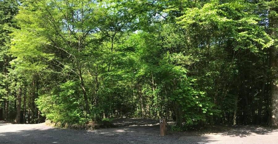 Foresters Village Kobitto Asagiri Camp Field (旧 猪の頭オートキャンプ場),静岡県,サイトの様子,ソロサイト